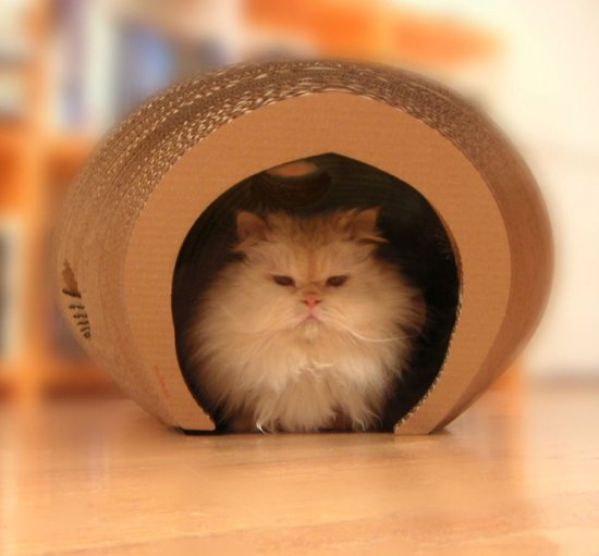 Cocoon playhouse for your kitten