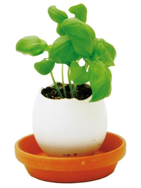 Eggling Basil