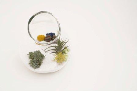 Litill Terrarium Digur